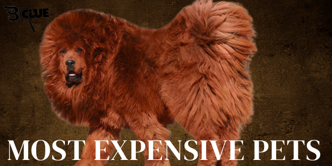 Expensive Pets